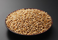 写真:小麦